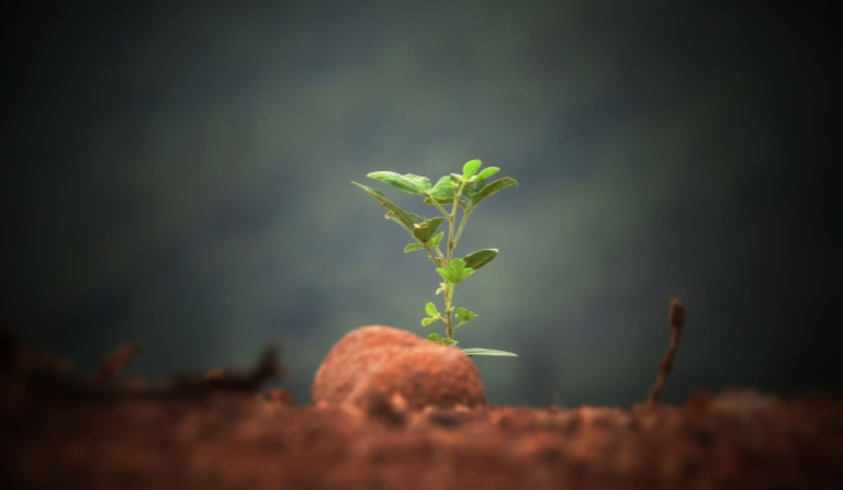 http://opuroleite.com.br/dia-mundial-do-meio-ambiente-vamos-falar-sobre-os-cuidados-com-nosso-planeta/